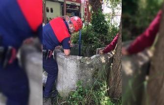 İtfaiyeden tilki kurtarma operasyonu