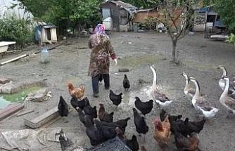 """""""Yavrularını beslemek istiyor"""""""