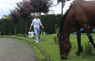Sokakta bulduğu At'ı evine getirdi
