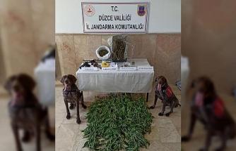 Uyuşturucu tacirlerine köpekli aramada suçüstü