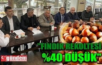 """""""FINDIK REKOLTESİ %40 DÜŞÜK"""""""