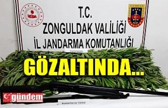 İZİNSİZ KENEVİR, RUHSATSIZ AV TÜFEĞİ...