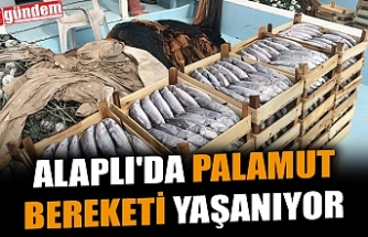 ALAPLI'DA PALAMUT BEREKETİ YAŞANIYOR