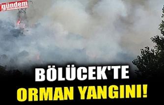 BÖLÜCEK'TE ORMAN YANGINI!
