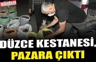 DÜZCE KESTANESİ, PAZARA ÇIKTI