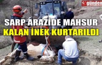 SARP ARAZİDE MAHSUR KALAN İNEK KURTARILDI