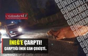 EREĞLİ'DE DİKKATSİZ SÜRÜCÜ İNEĞE ÇARPTI!!