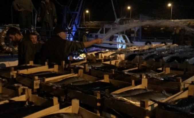 Akçakocalı balıkçı bin kasa torikle limana döndü