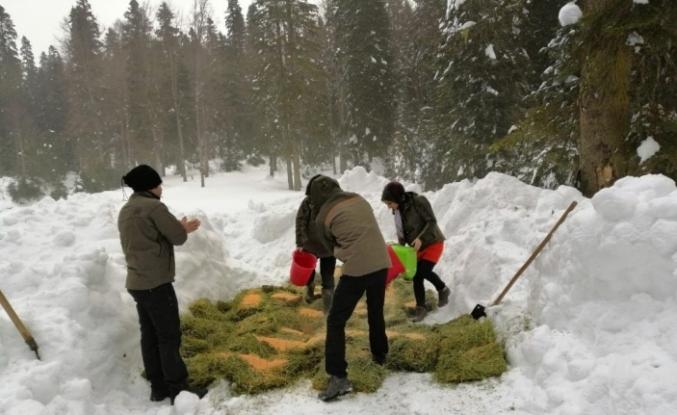 Kar kalınlığının 1 metreyi geçtiği bölgelere yem bıraktılar