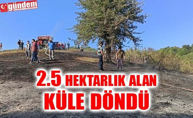 FINDIKLIKTA BAŞLADI, ORMANA SIÇRADI, 2.5HEKTARLIK ALAN KÜLE DÖNDÜ