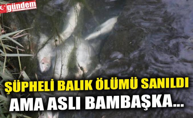 ŞÜPHELİ BALIK ÖLÜMÜ SANILDI AMA ASLI BAMBAŞKA...